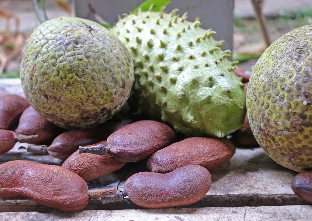 soursop-stinking-toe-breadfruit
