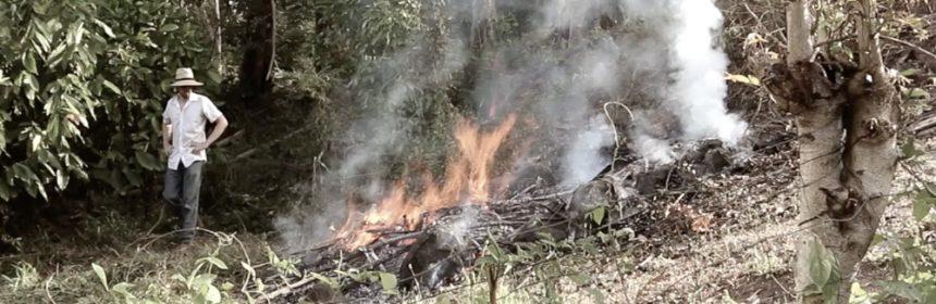 biochar-burning