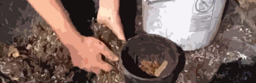 permaculture-plant-potting