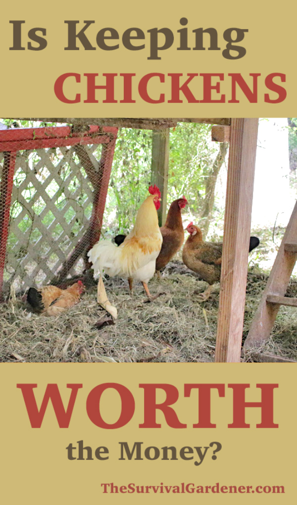 keeping chickens worth it pinterest image