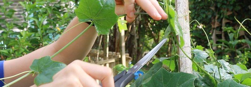 step1-take-cuttings