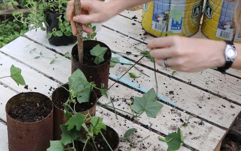 step3-stick-cuttings-in-soil