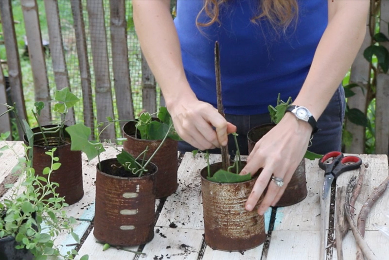 step4 rooting cuttings the easy way