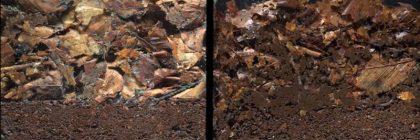 Soil-life-no-till