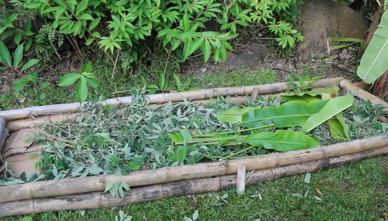lasagna gardening pigeon-peas-layer