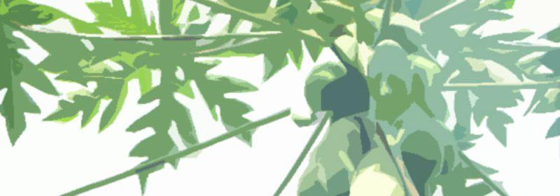 papaya-image