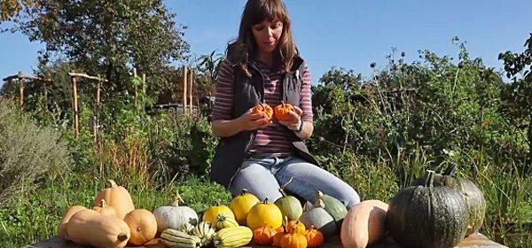 squash-varieties-grown-to-cook