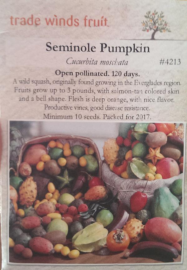 Seminole-pumpkins-Douglas-1