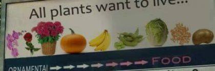 vegan-billboard