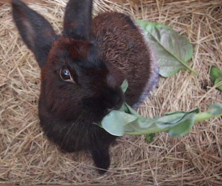 rescue-bunny-2