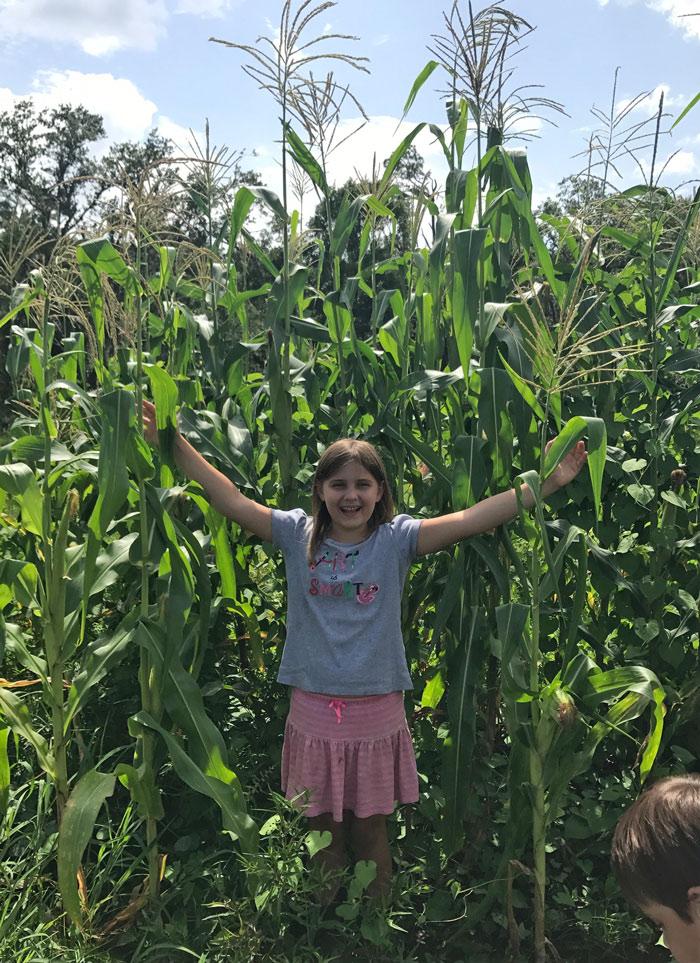 Your Florida Gardening Success | The Survival Gardener