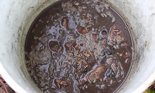 homemade fish emulsion